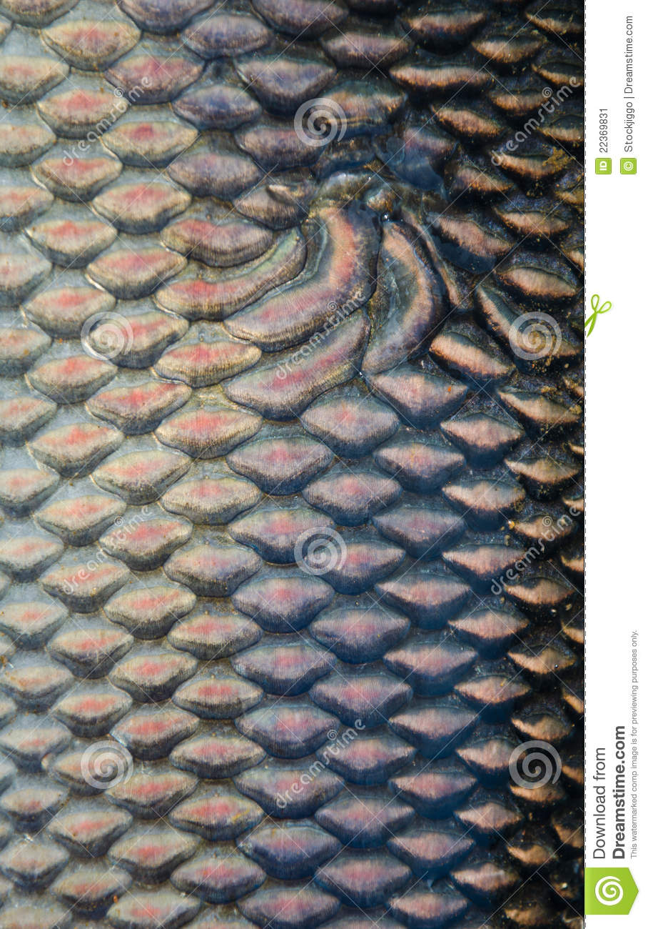 fish scales texture stock image