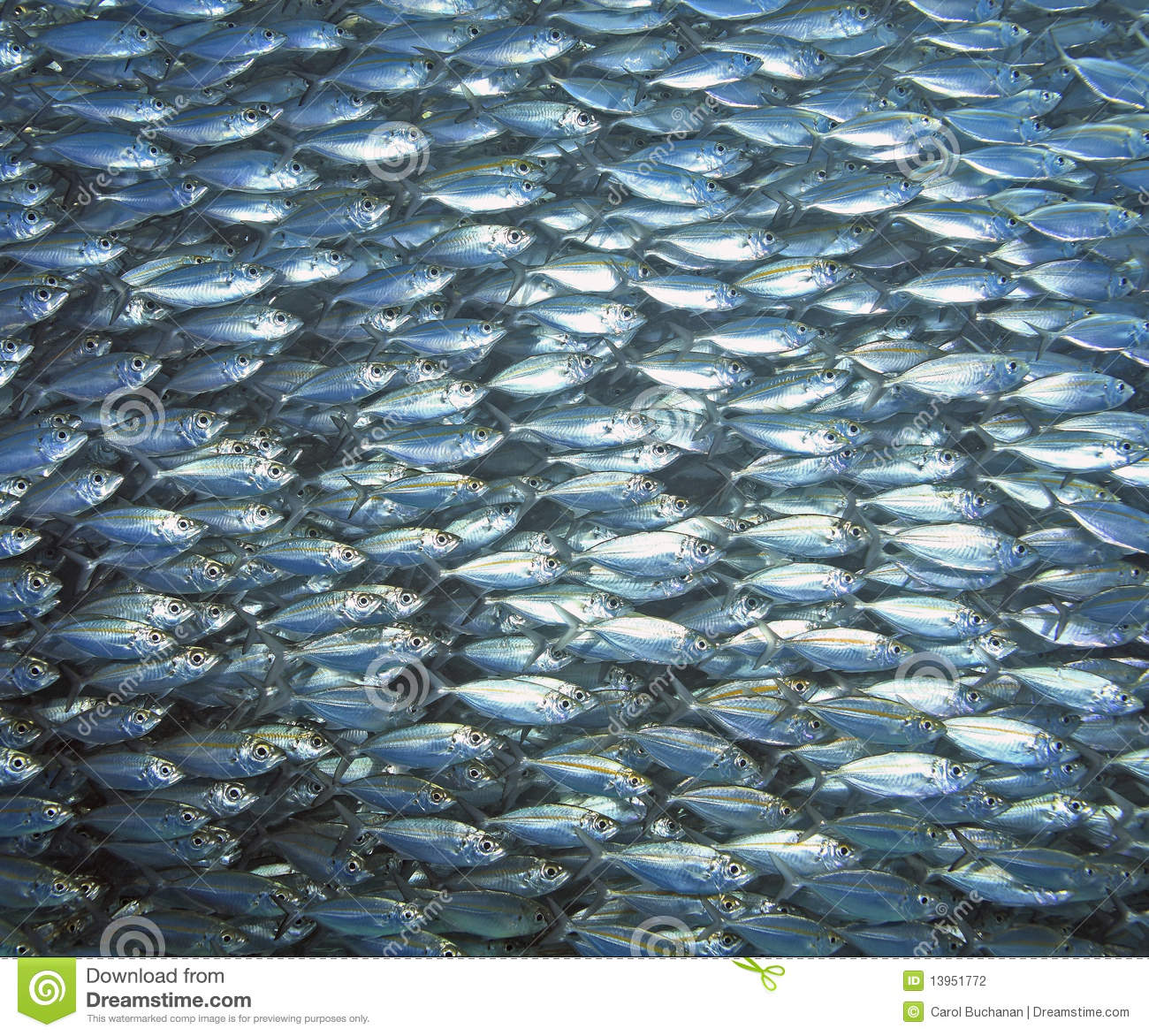 Fish school stock photography image 13951772 for Dream of fish swimming