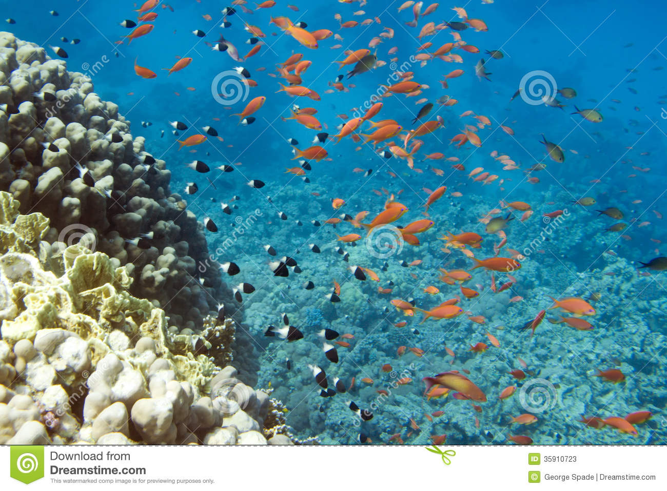 Fish school stock image image of school animal coral for Saltwater reef fish
