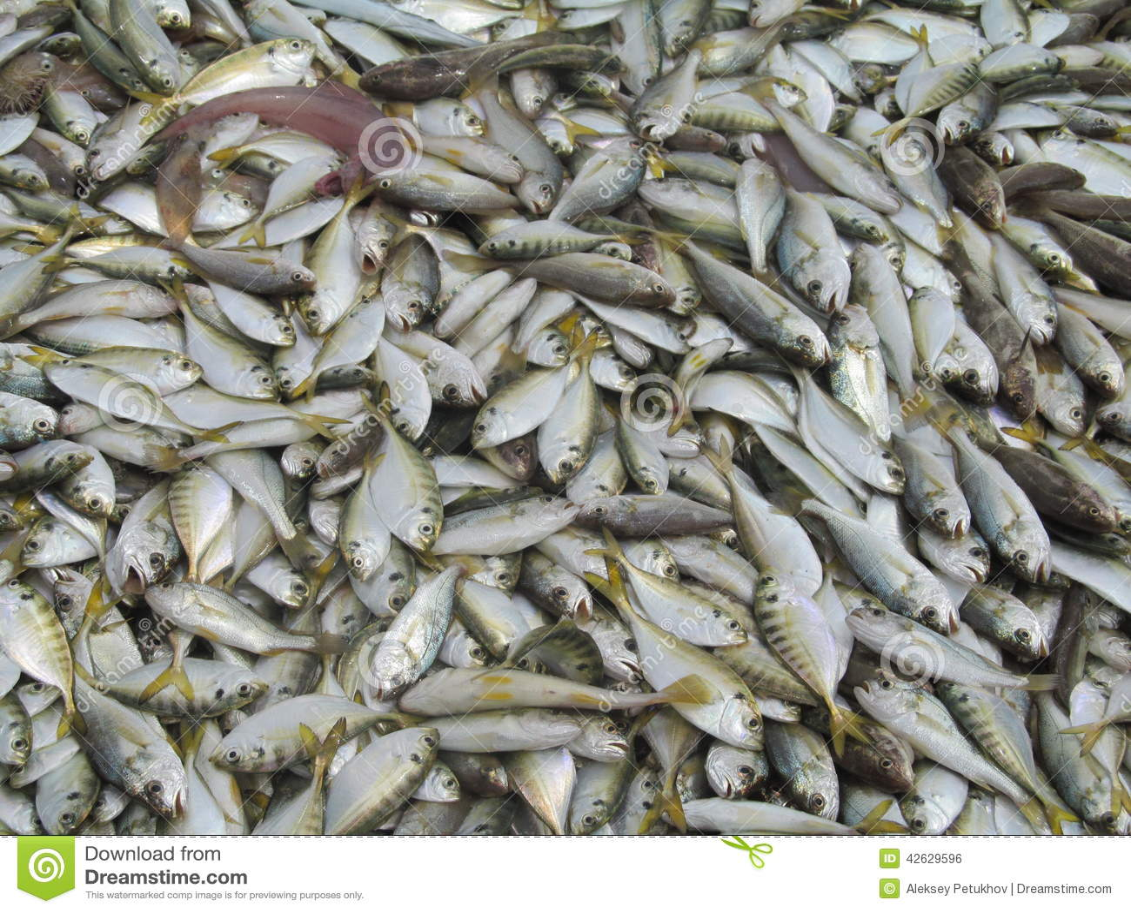 Fish sea ocean vietnam asia fishing catch stock photo for Fish in vietnam