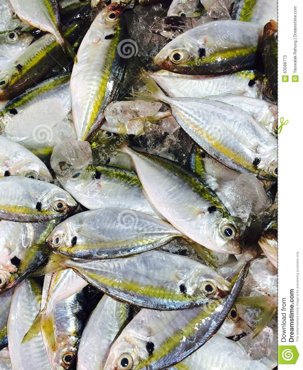 Jooker Lai Lai Lai Audio Theem Downlod: Fish Sell In The Market Stock Photo