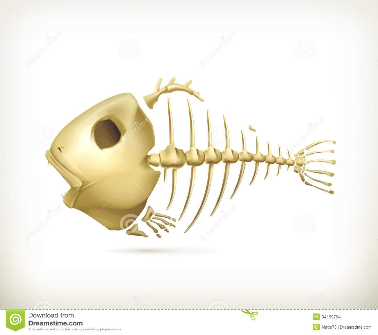 Fish skeleton, illustration on white background.