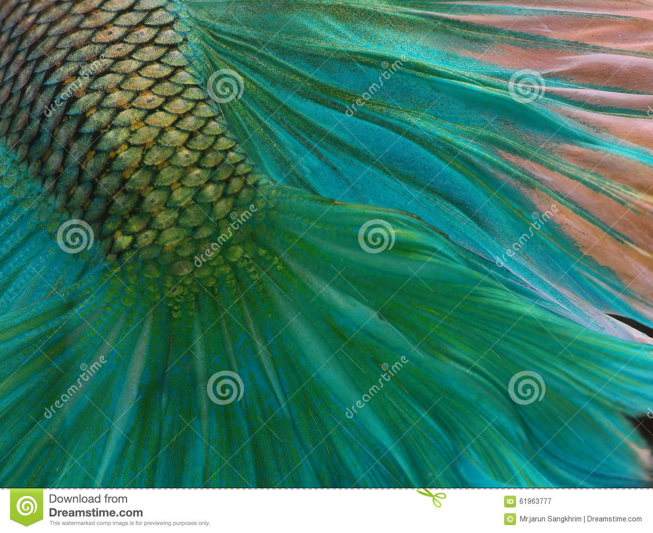 Fish skin stock image. Image of texture, close, freshwater - 61963777