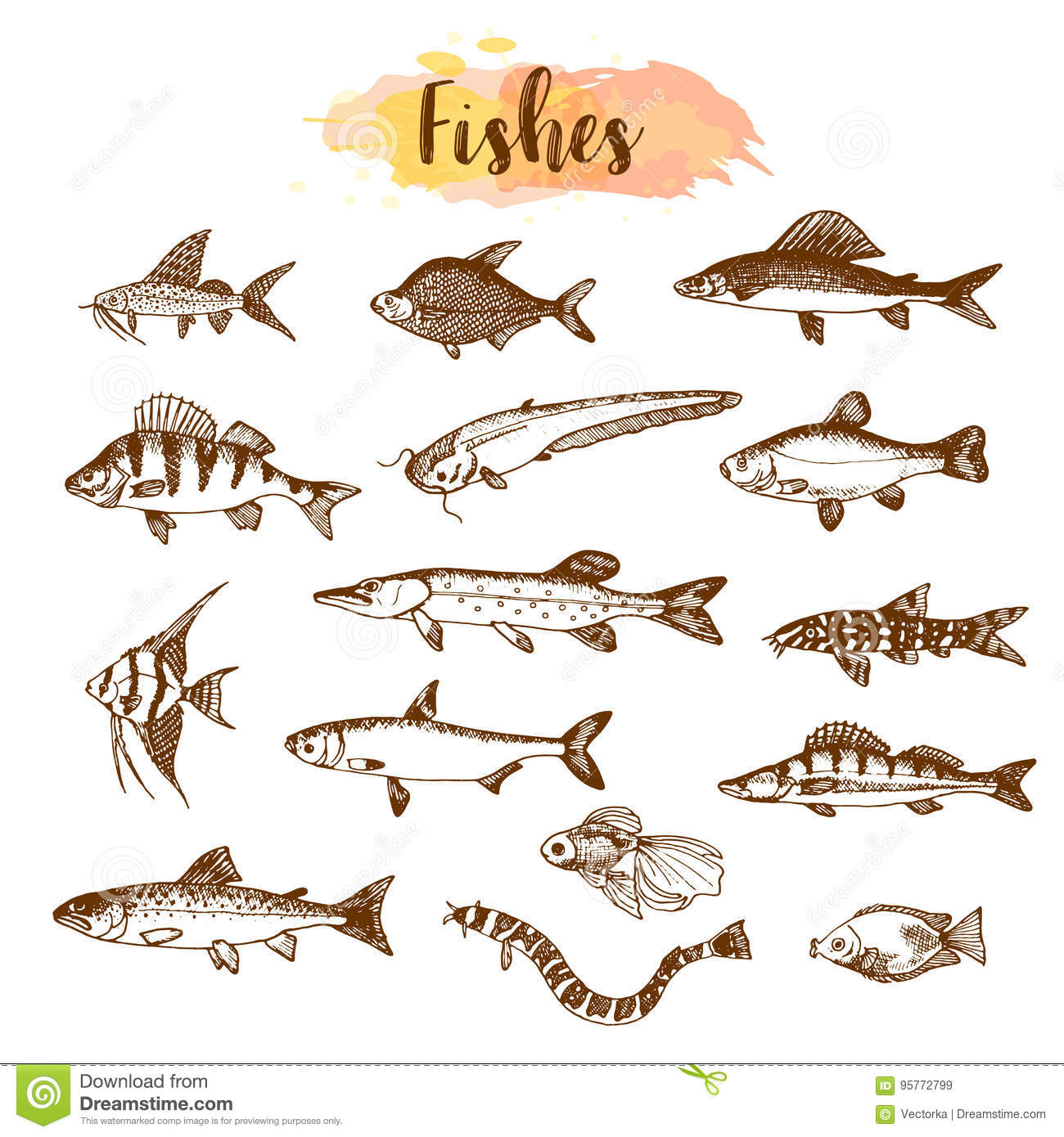 types of ocean fish. fish sorts and types. hand drawn vector illustrations. lake in line art style. sea ocean creatures for types of d