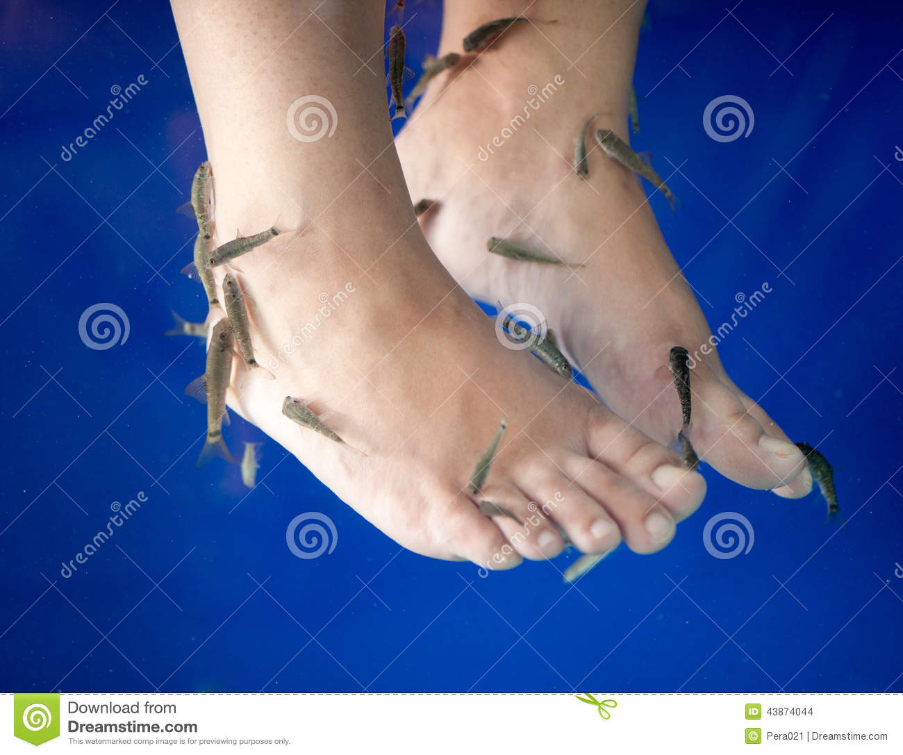 Fish spa feet pedicure skin care treatment with the fish for Fish foot spa
