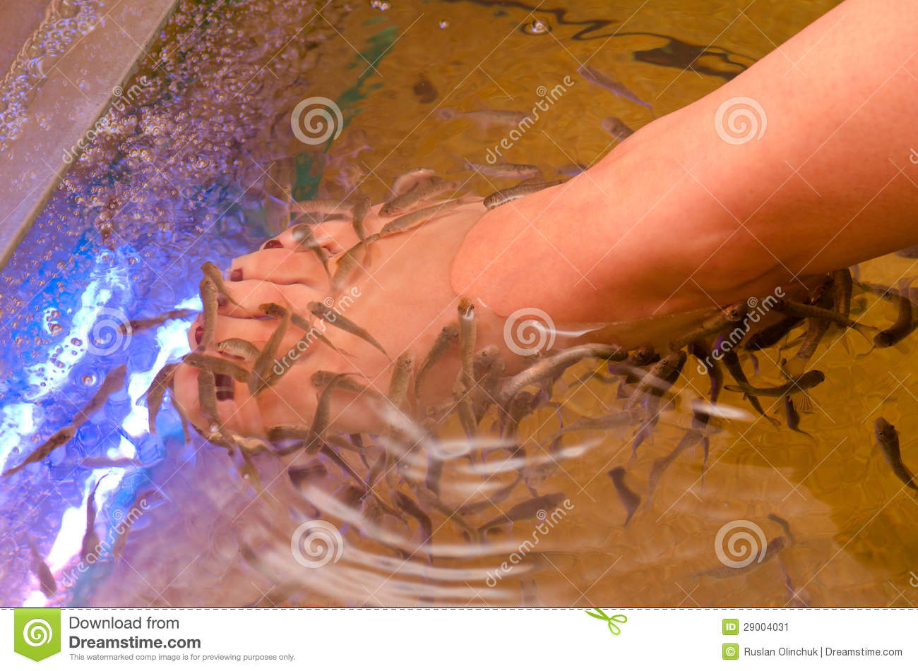 Fish spa pedicure stock image image 29004031 for Fish pedicure price