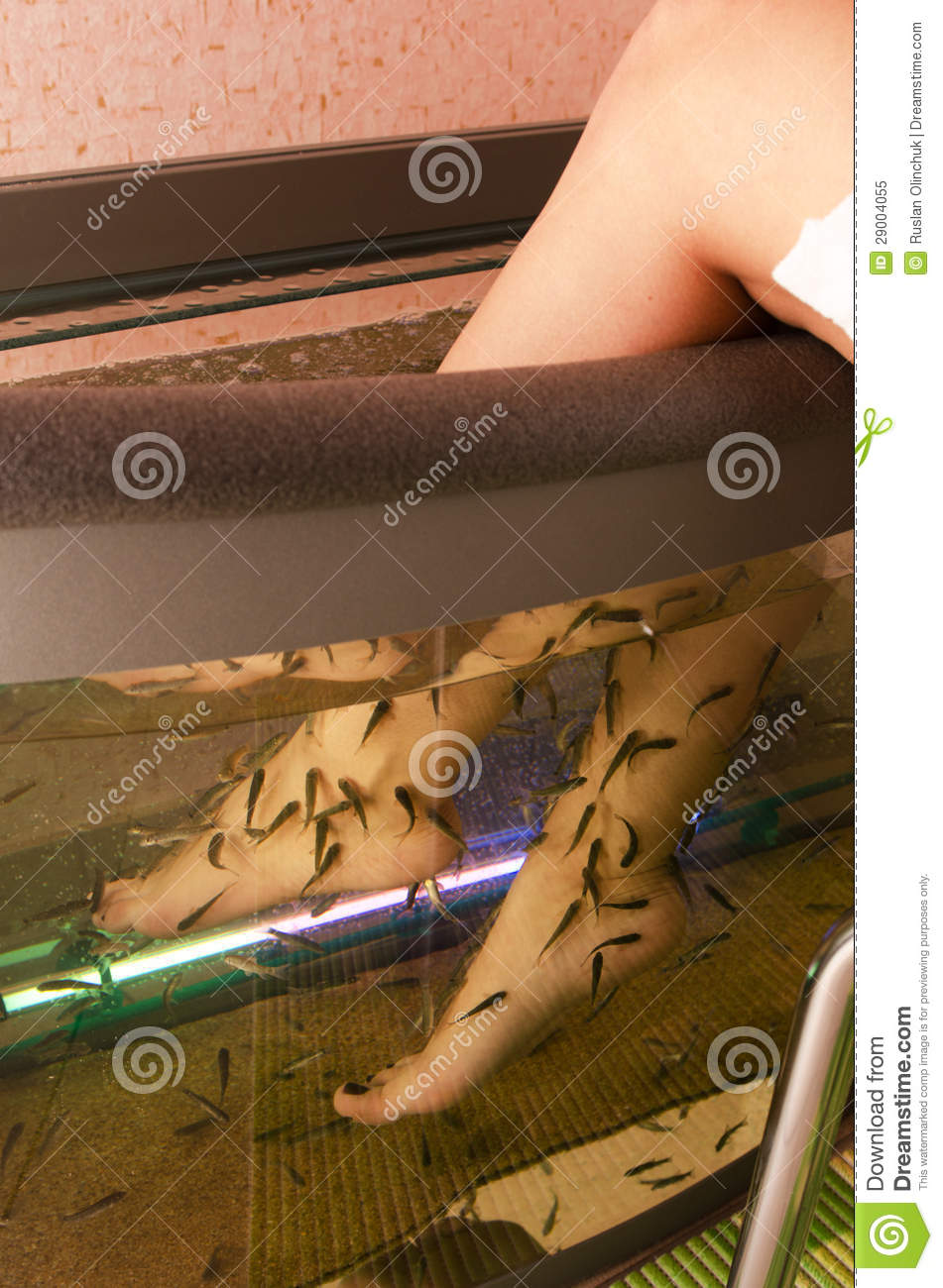 Fish spa pedicure royalty free stock photo image 29004055 for Fish spa treatment