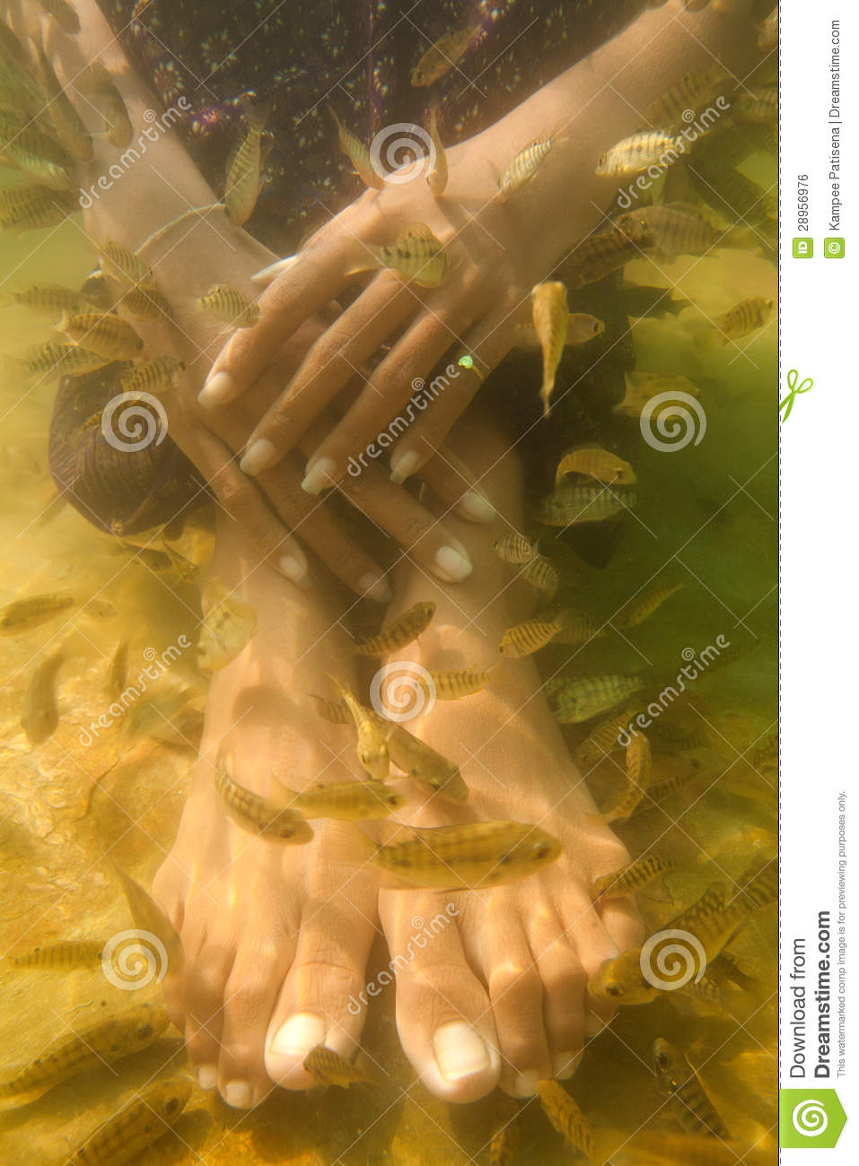 Fish spa pedicure treatment royalty free stock image for Fish pedicure price