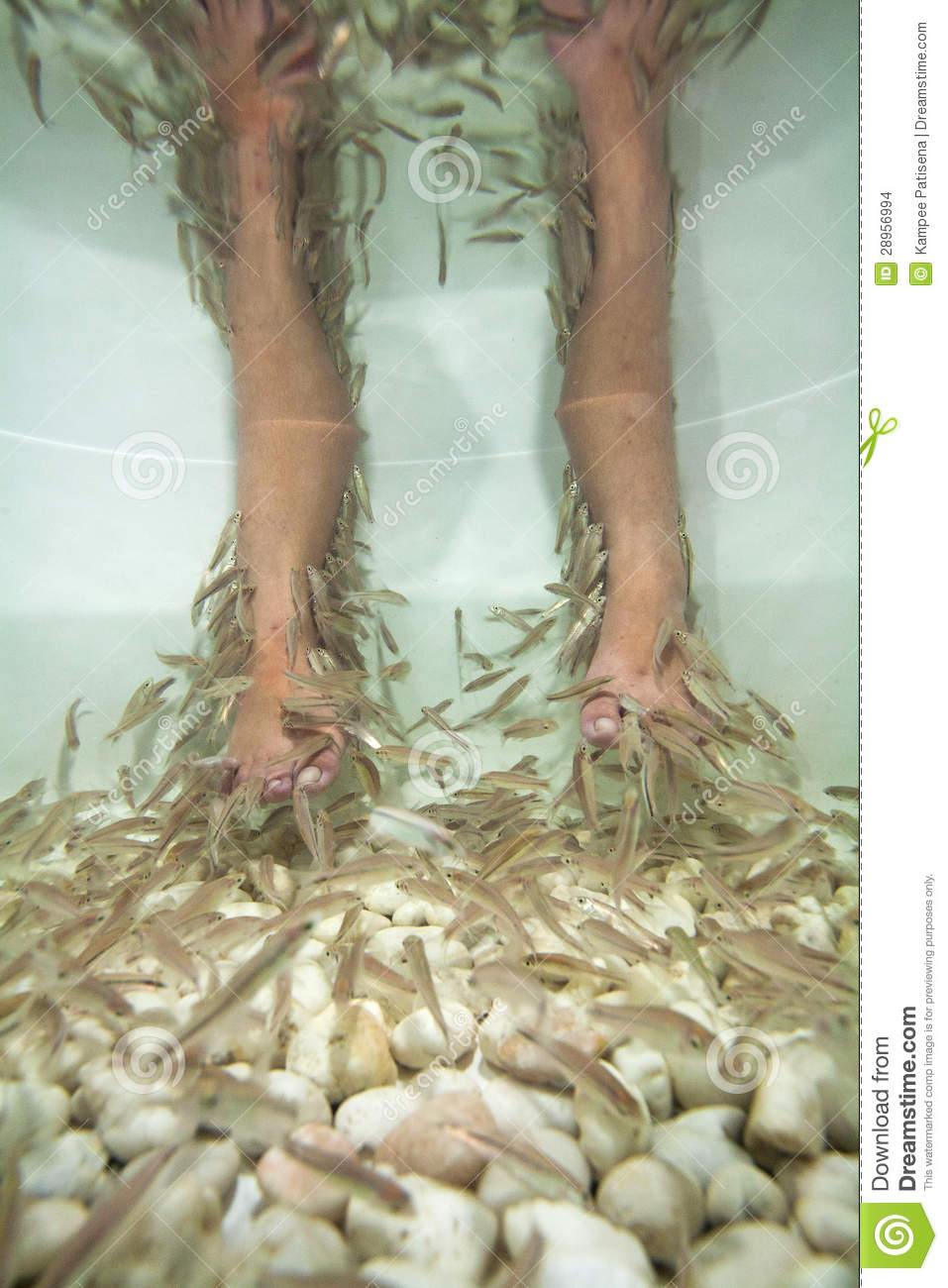 fish spa pedicure treatment stock images image 28956994
