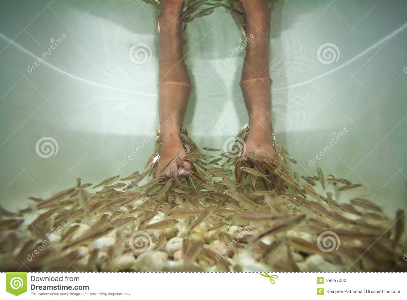 Fish spa pedicure treatment stock photo image 28957000 for Fish spa treatment
