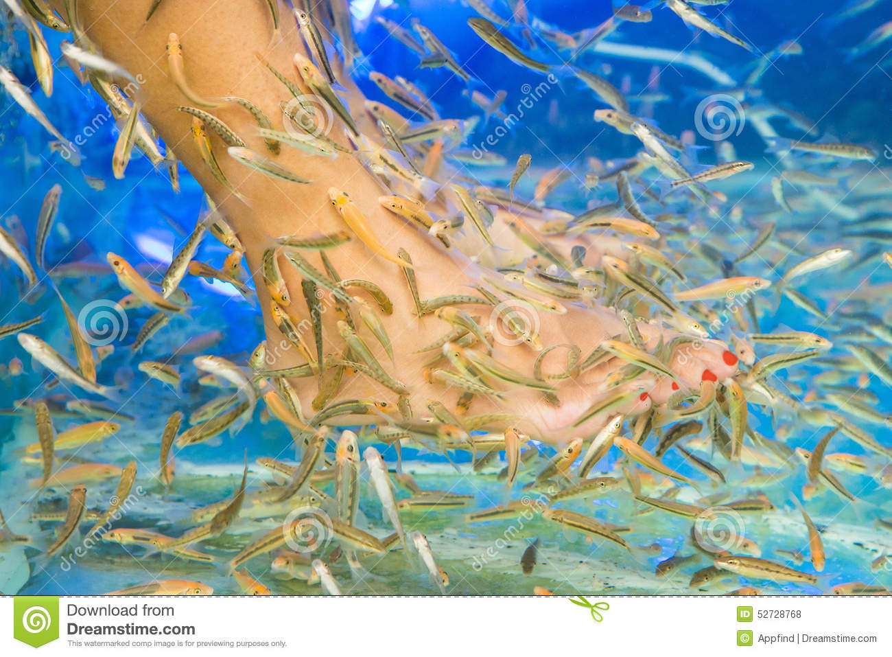 Fish spa pedicure stock photo image 52728768 for Fish pedicure price