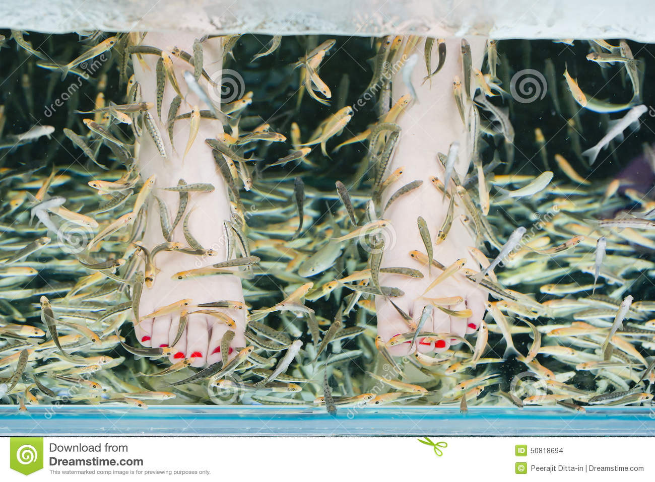 Fish spa pedicure stock image 29004055 for A salon called fish
