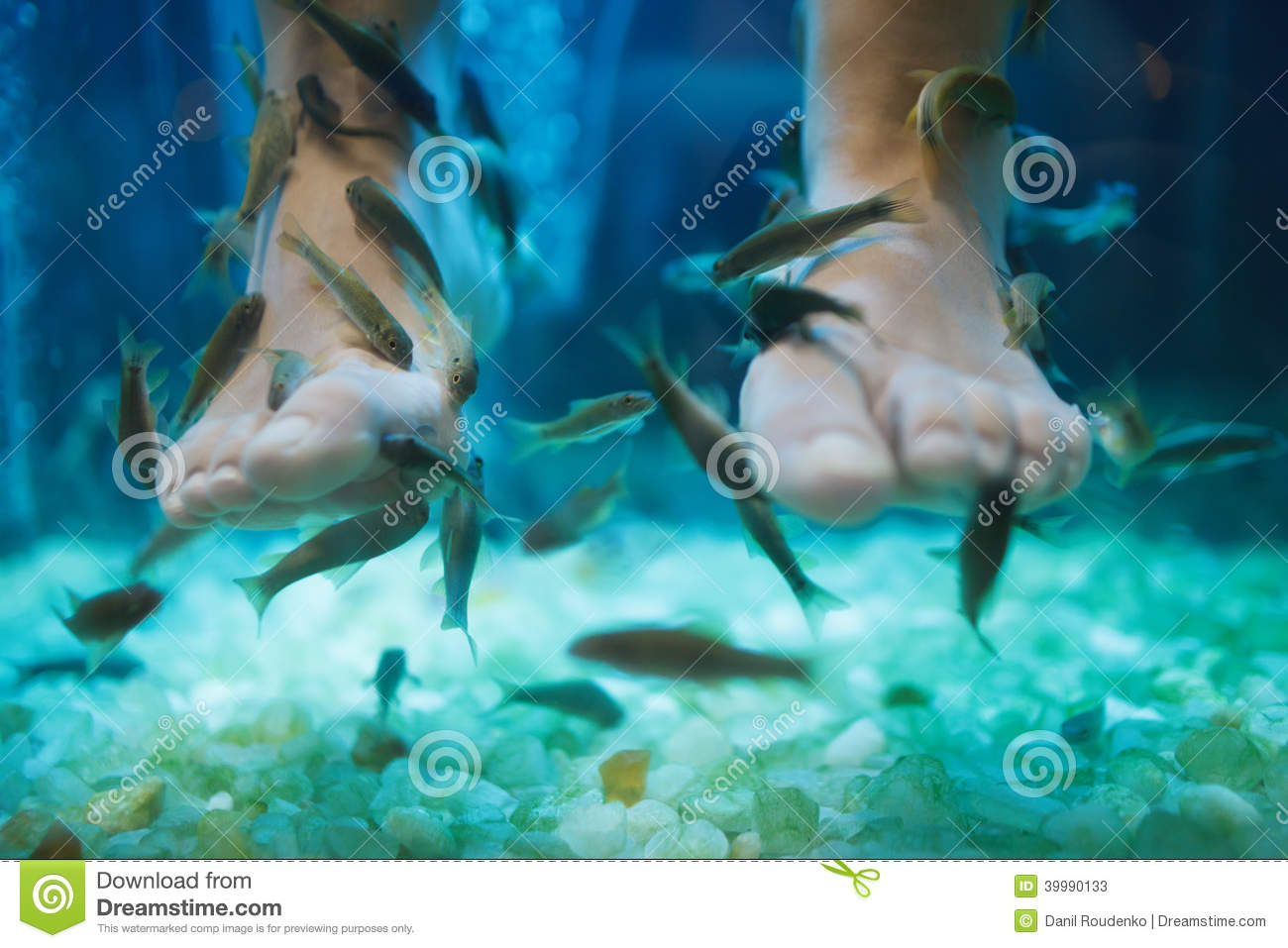 Fish spa pedicure wellness skin care treatment stock photo for A salon called fish