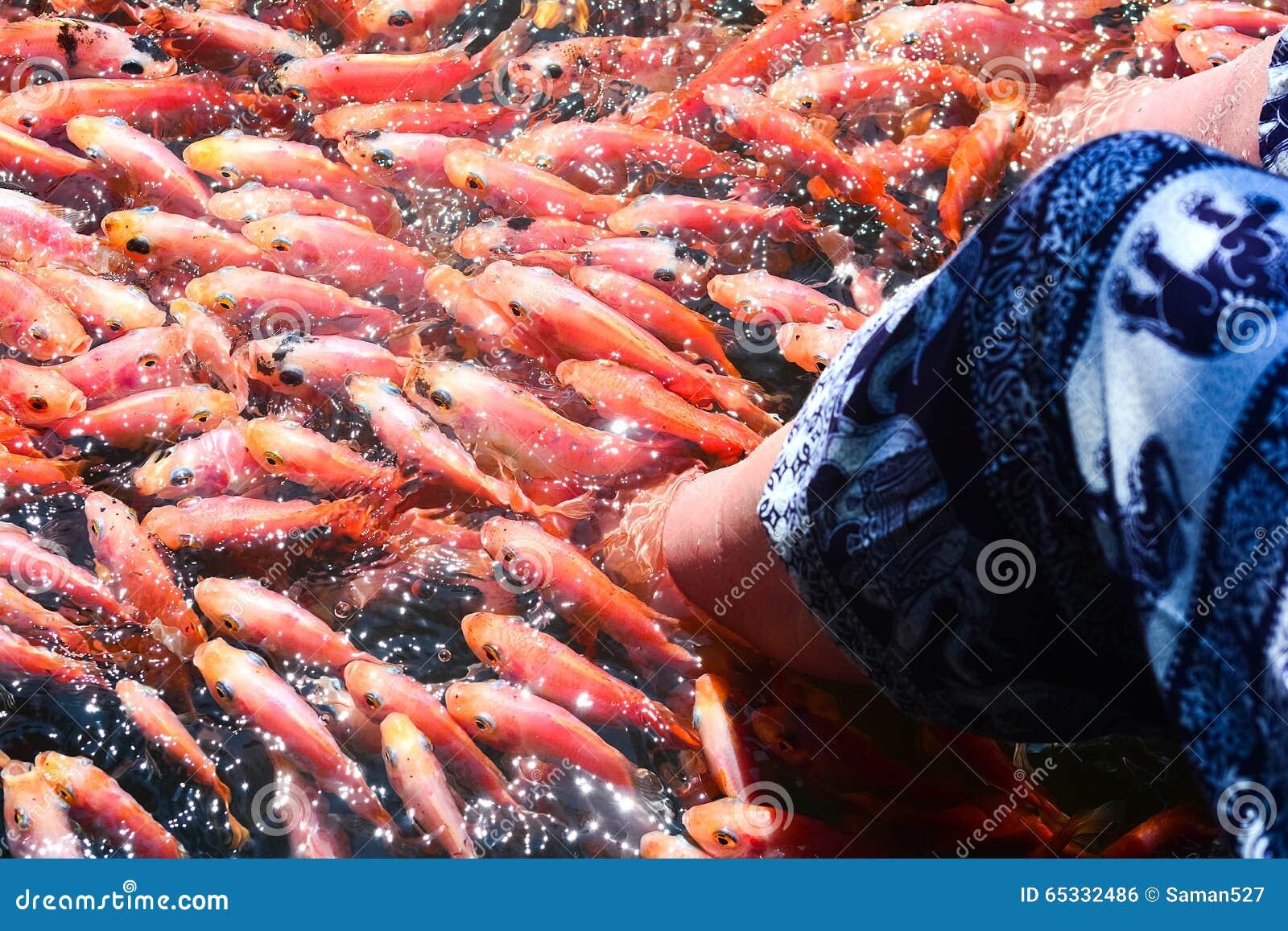 Fish aquarium in sri lanka - Fish Spa Therapy At Madu River In Sri Lanka
