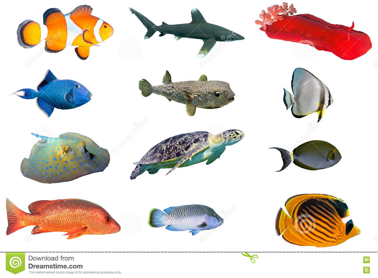 Fish species index of red sea fish isolated on white for Ocean fish species