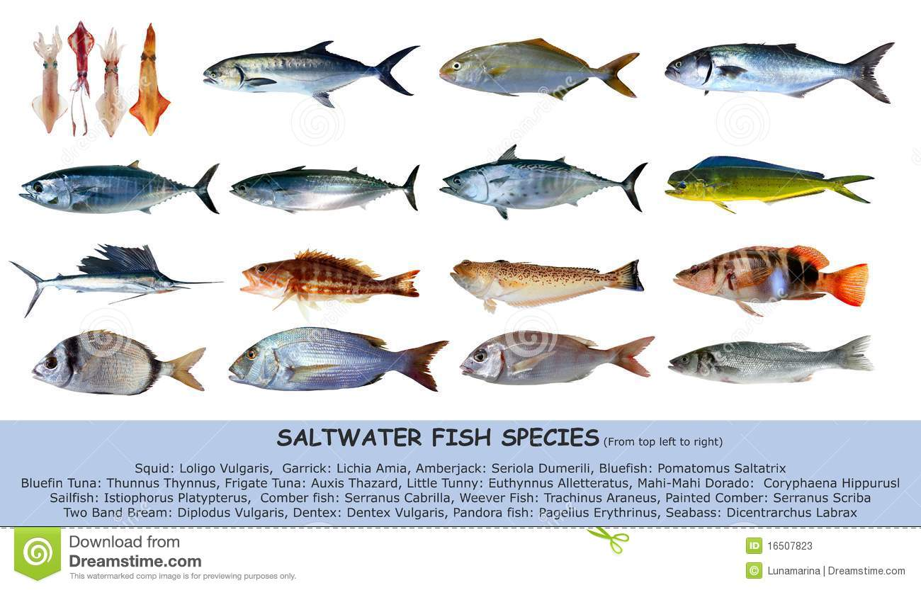 Fish species saltwater classification isolated stock for Atlantic game fish