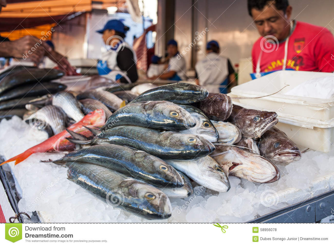 Fish stall editorial stock photo. Image of seafood ...