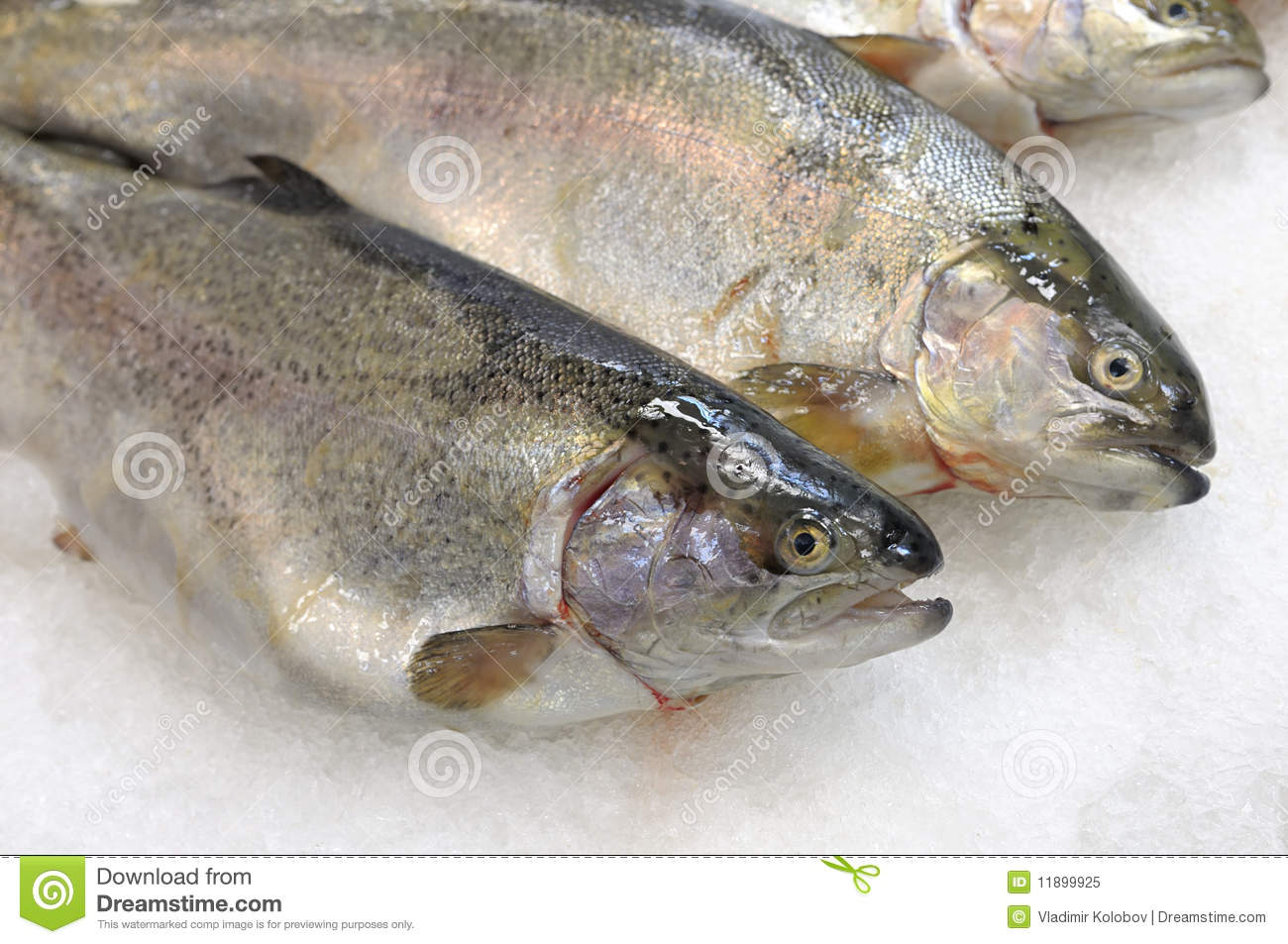 Fish is on store shelves royalty free stock photo image for Fresh fish store