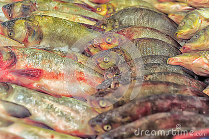 Fish in the stores royalty free stock photos image 36334198 for Fresh fish store