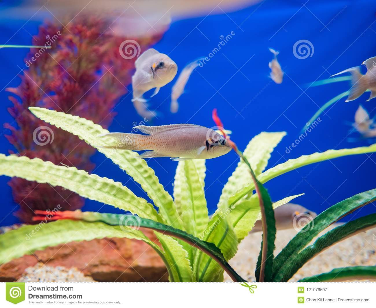 Fish Swimming In The Aquariums Of The Famous SeaWorld Stock