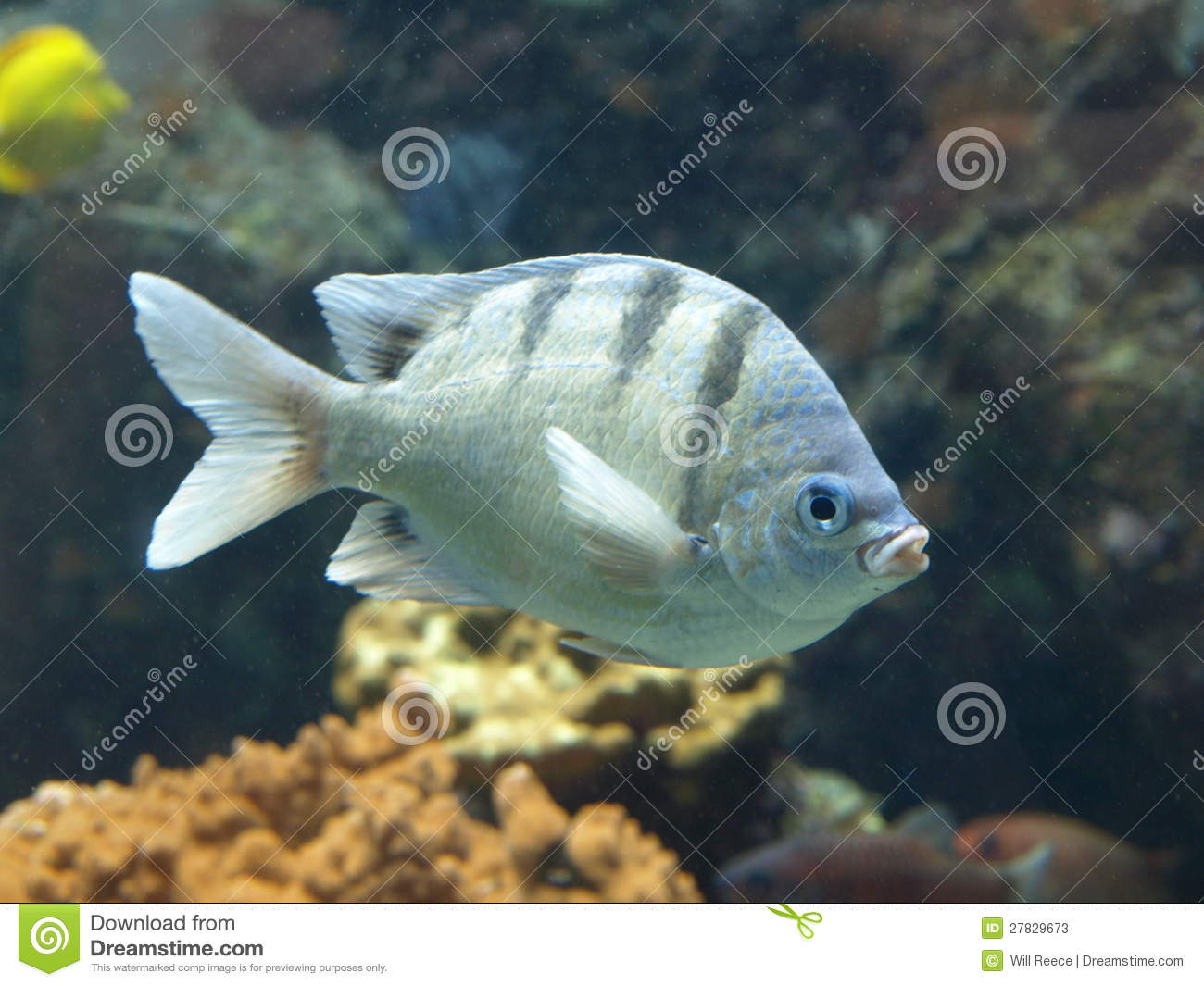 Fish swimming in coral reef stock photography for Dream of fish swimming