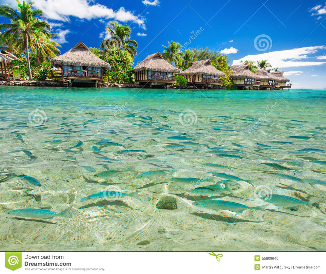 Fish swimming in the lagoon with overwater villas and palm for Dream of fish swimming