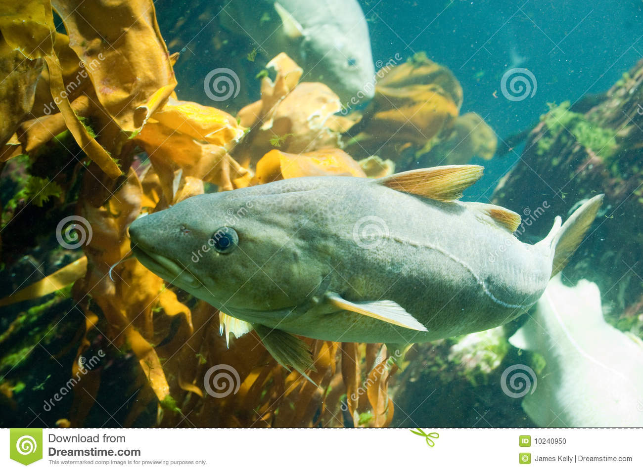 Fish swimming underwater stock photo image 10240950 for Dream of fish swimming