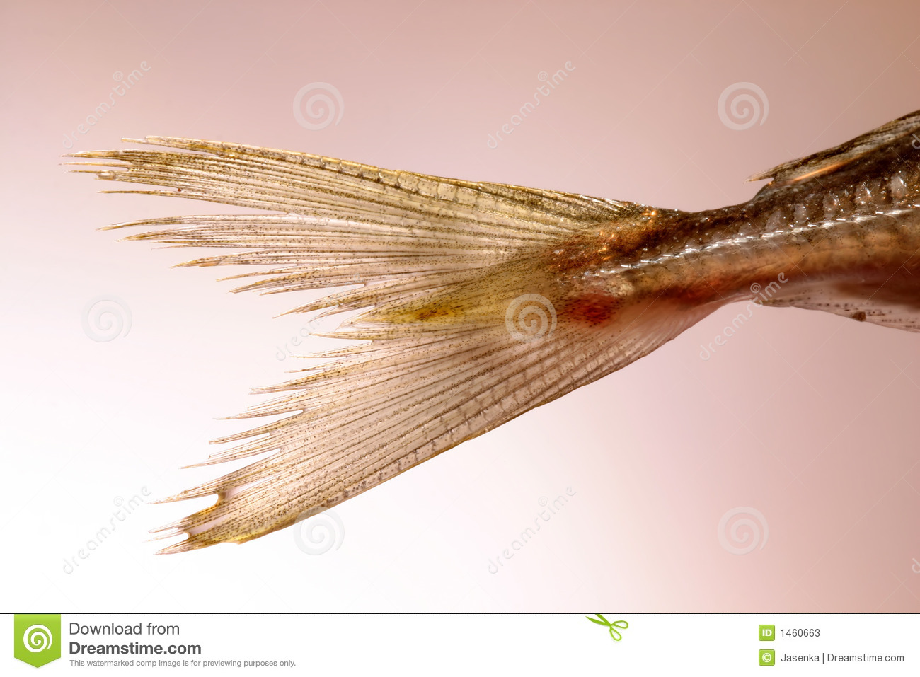 Fish tail stock photos image 1460663 for Fish and tails