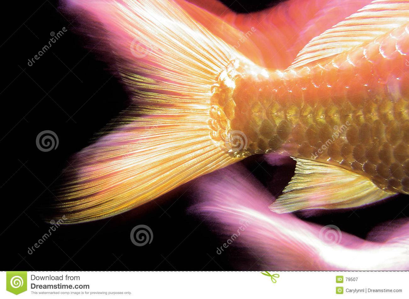 Fish tail fish beautiful - photo#17