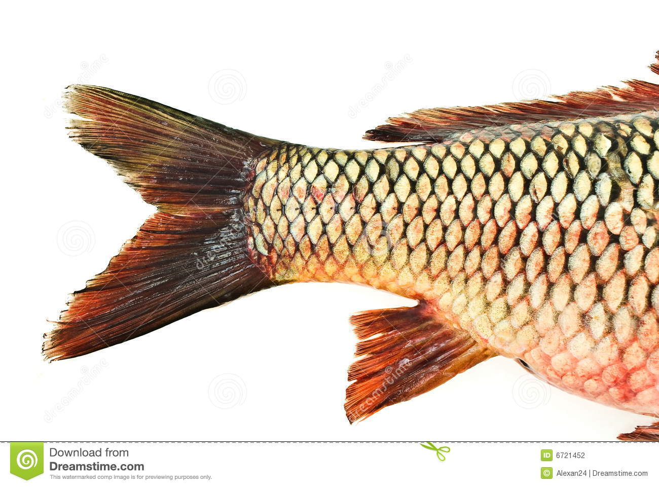 Fish tail carp stock photography image 6721452 for Fish and tails