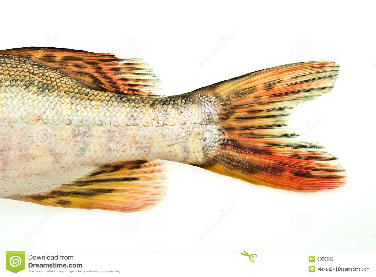 Fish tail pike stock photo image of part detail sample for Fish and tails