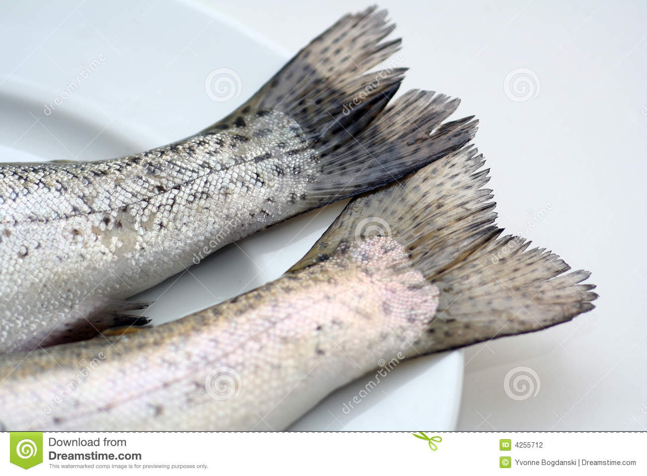 Fish tails on a white plate stock photo image 4255712 for Fish and tails