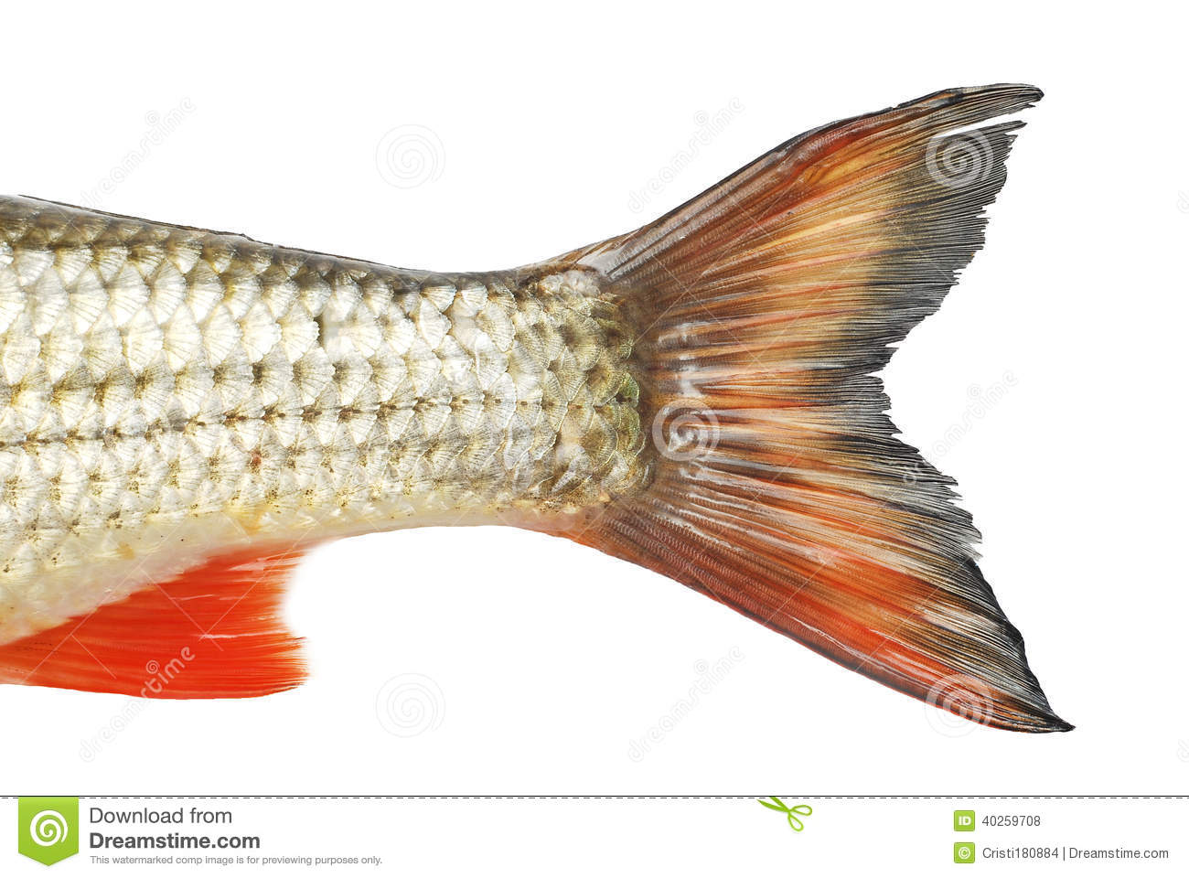 Fish Tale Stock Photo - Image: 40259708