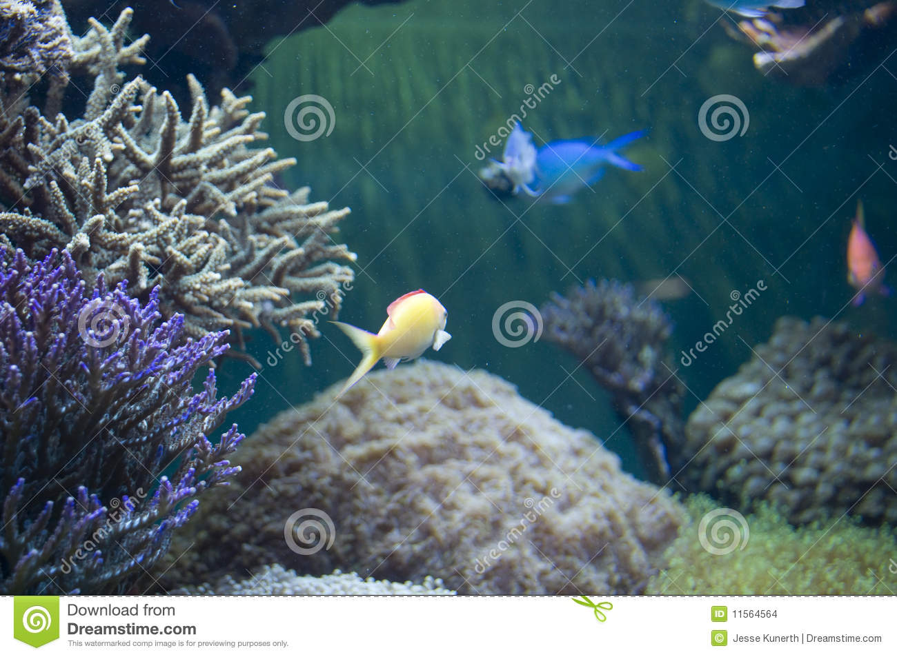 Fish tank stock images image 11564564 for Stock tanks for fish