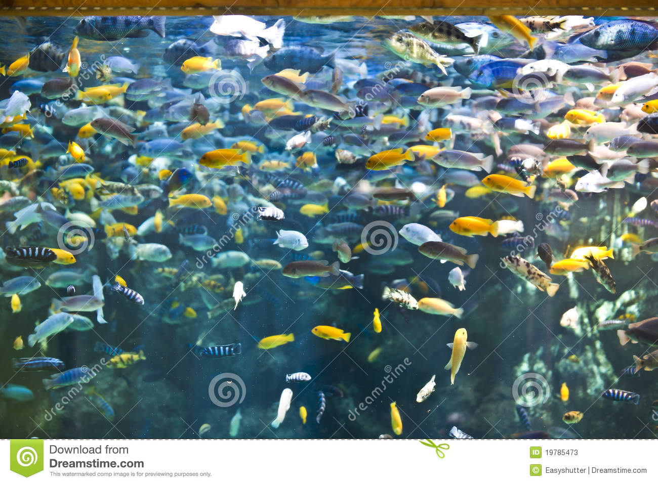 Fish tank stock photos image 19785473 for Fish and pets unlimited