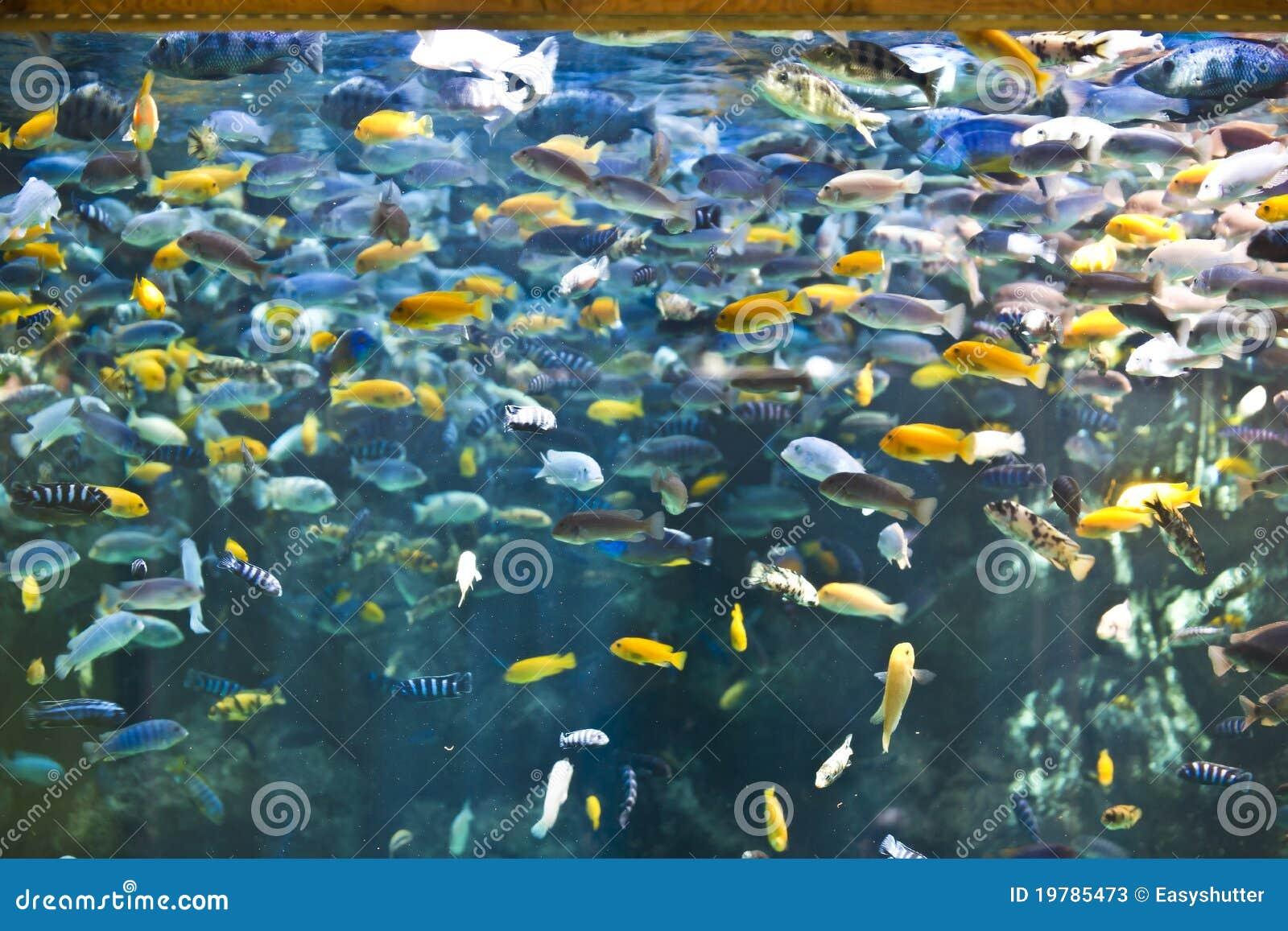 Fish tank stock photos image 19785473 for Dream of fish tank