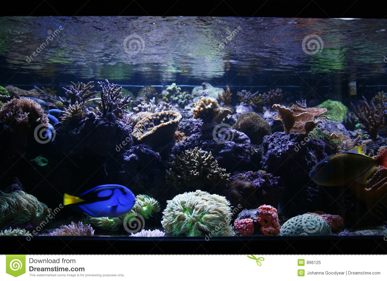 Fish tank royalty free stock photo image 896125 for Fish stock tank