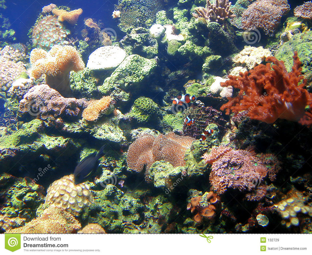 Fish tank with coral and sponges stock image image of for Fish stock tank