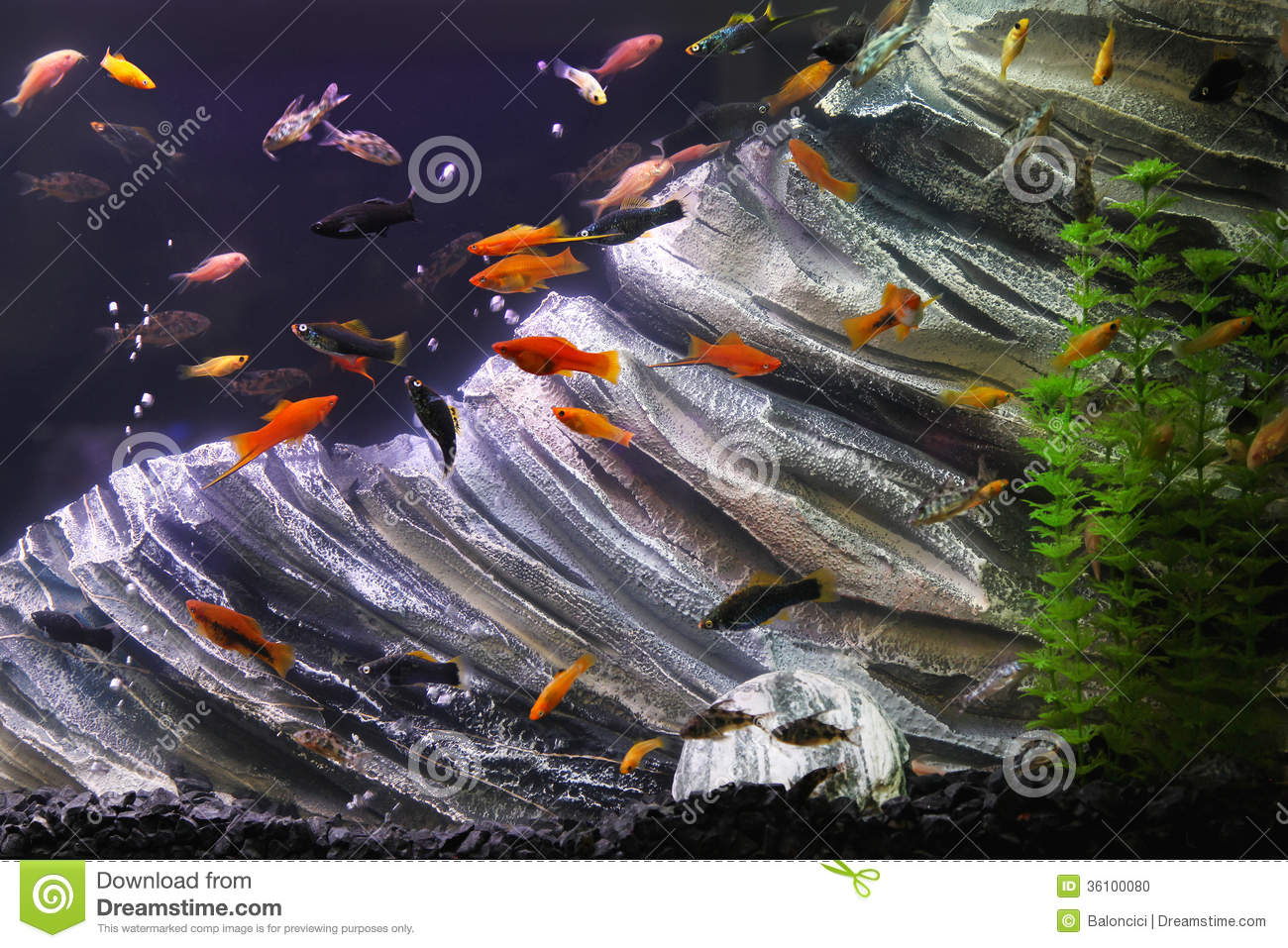 Aquarium fish tank download - Fish Tank