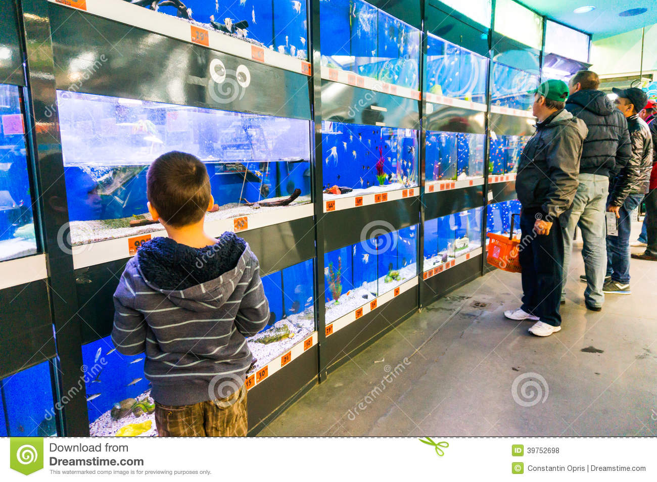 fish tanks in pet store editorial stock photo image