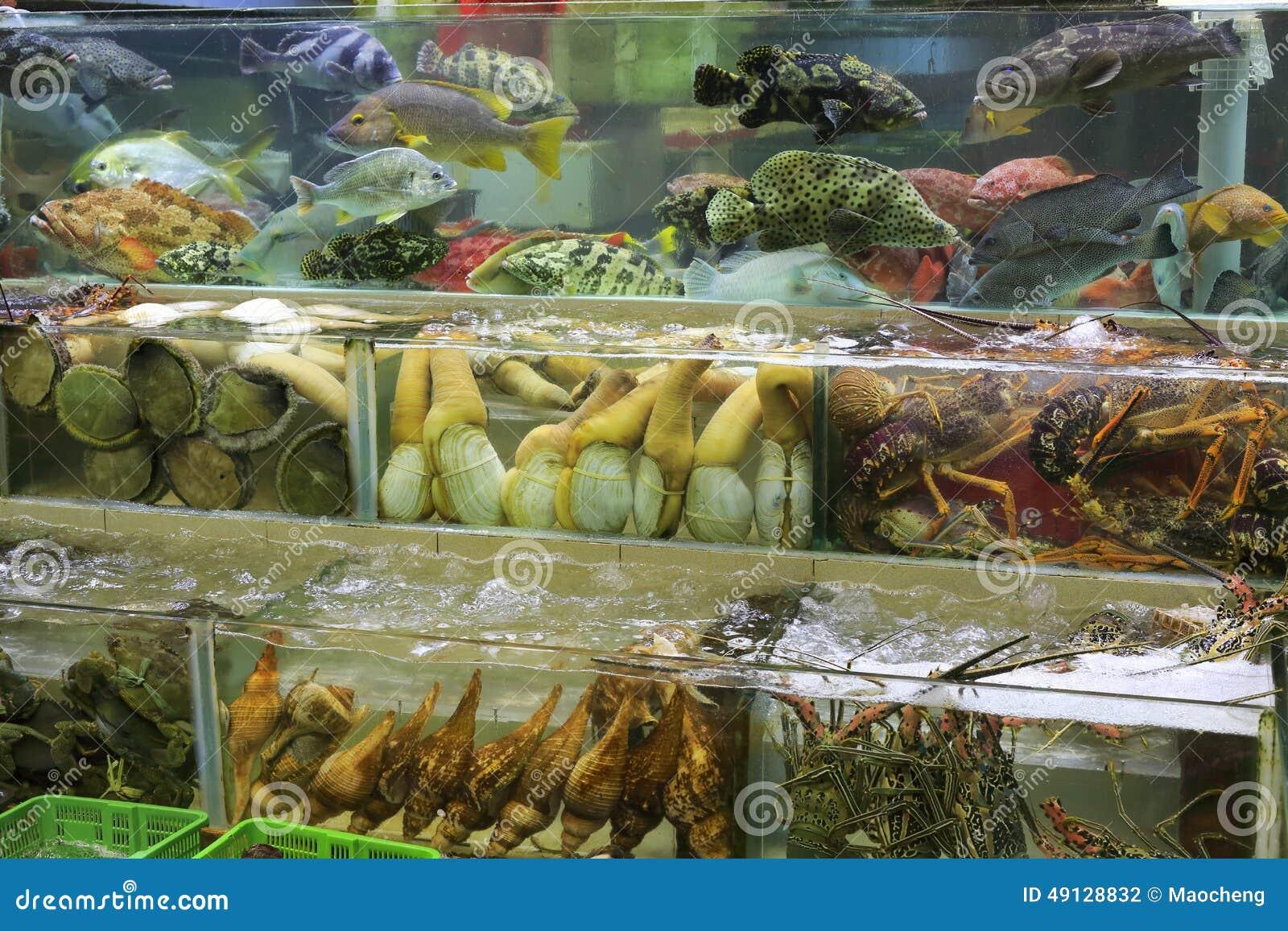 Fish Tanks Of Seafood Restaurant Stock Photo - Image: 49128832