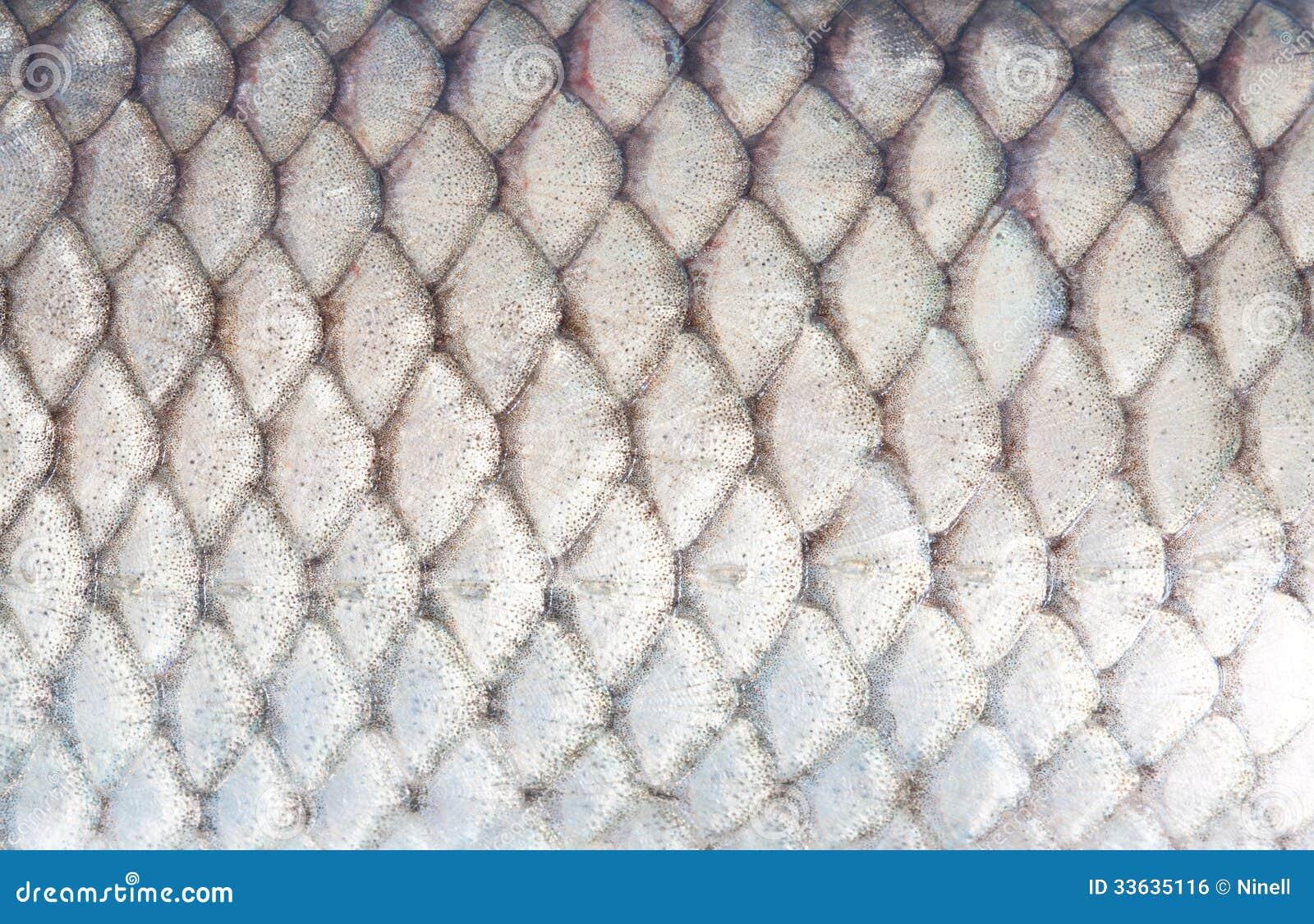FISH SCALE