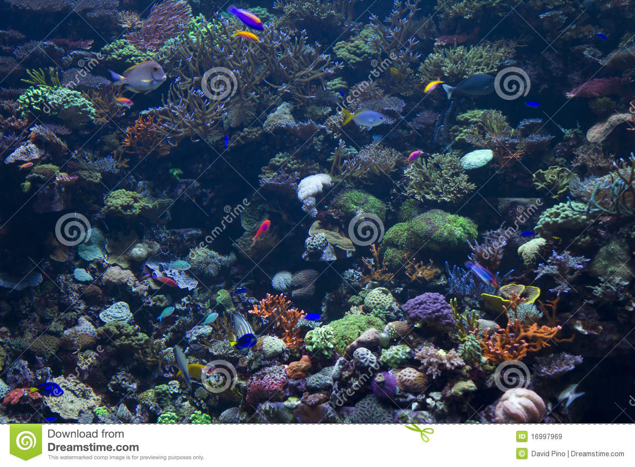 Royalty Free Stock Images Fish Under Sea Image16997969