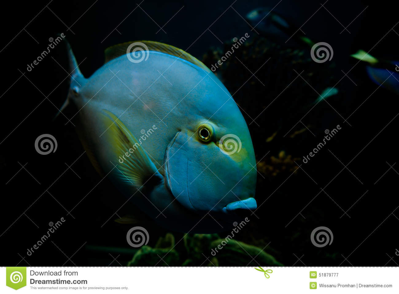 Fish under the sea stock photo image 51879777 for Fish under the sea