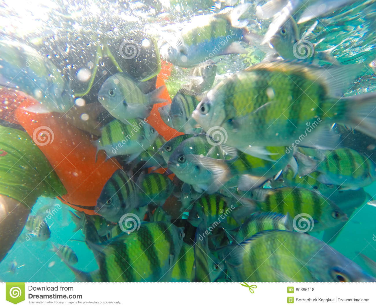 Fish Underwater The Andaman Sea Stock Photo - Image of colored ...