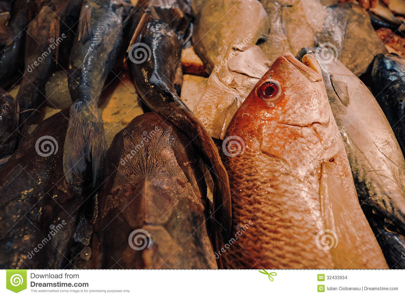 Fish stock images image 32433934 for Is a fish wet