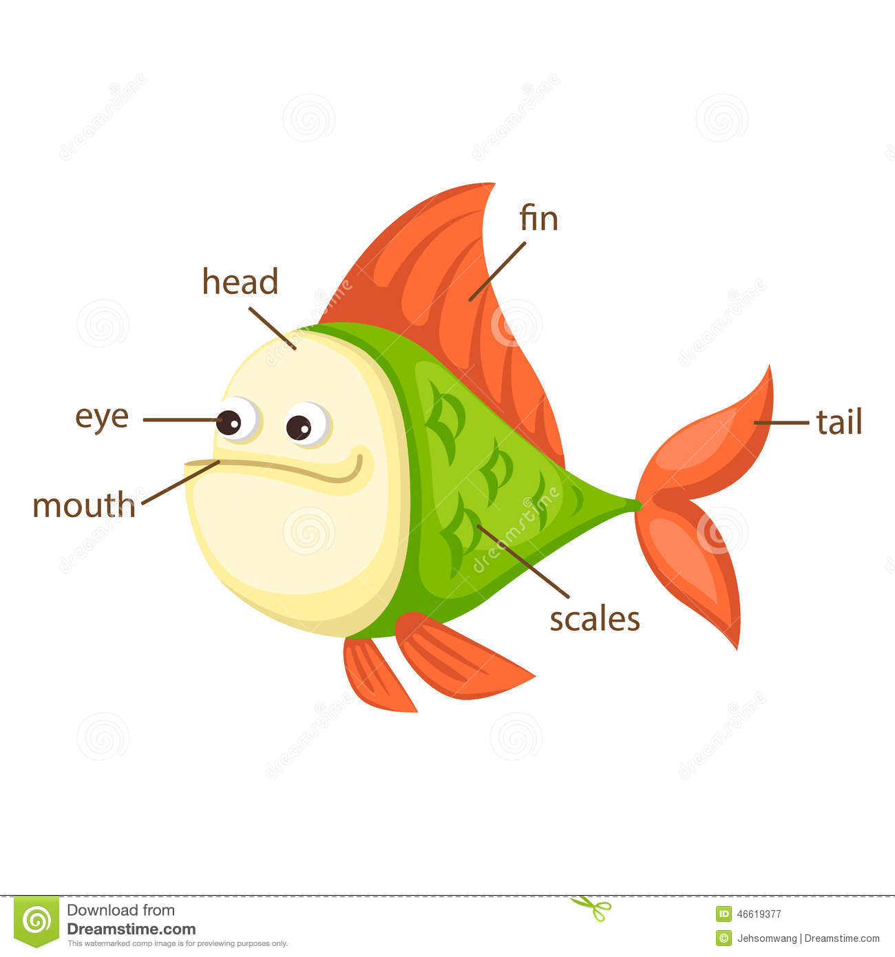 Fish Vocabulary Part Of Body Vector Stock Vector - Image: 46619377
