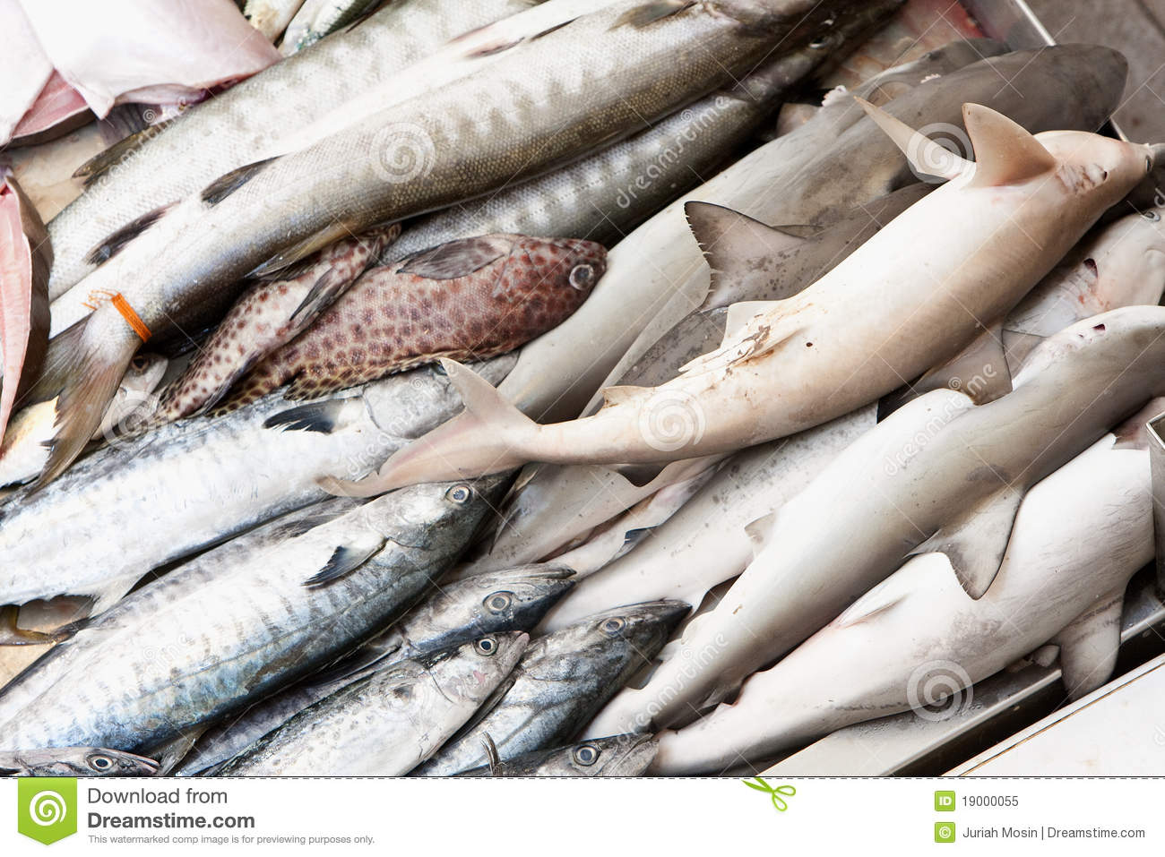 Fish in wet fish market royalty free stock photo image for Is a fish wet
