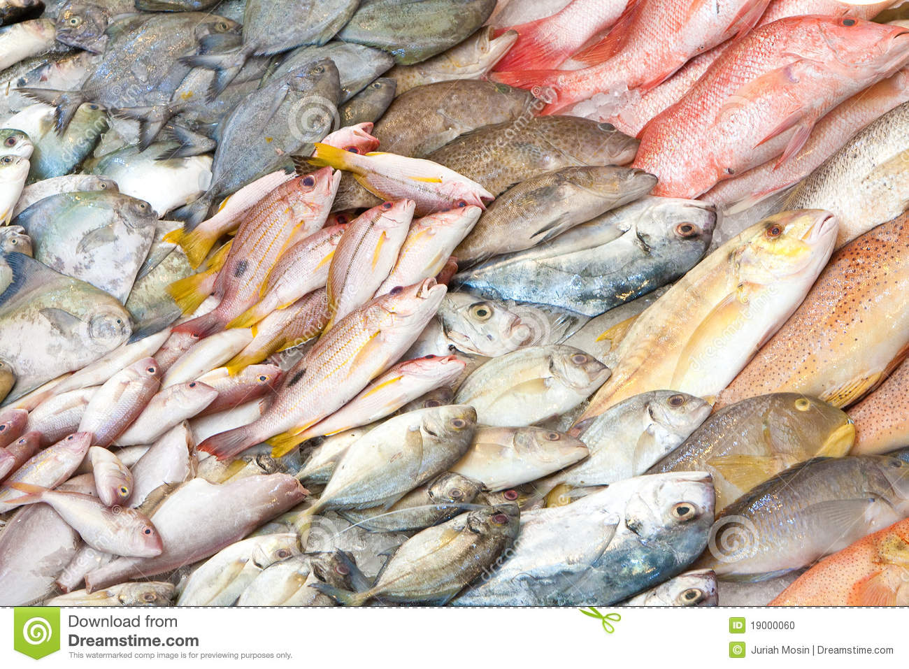 fish in wet fish market stock photo image 19000060
