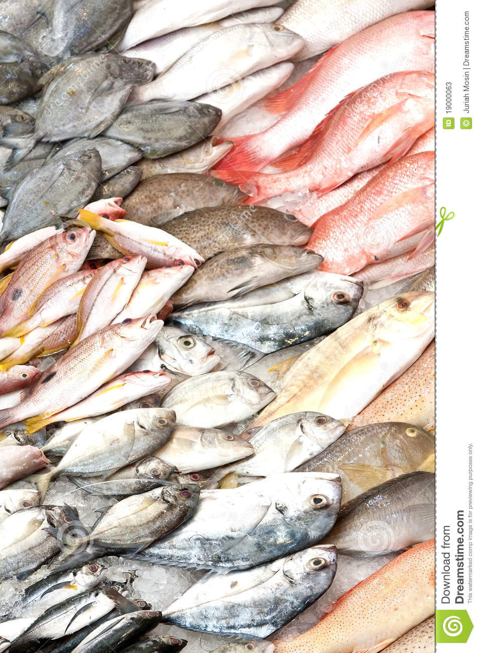 Fish in wet fish market stock photos image 19000063 for Is a fish wet
